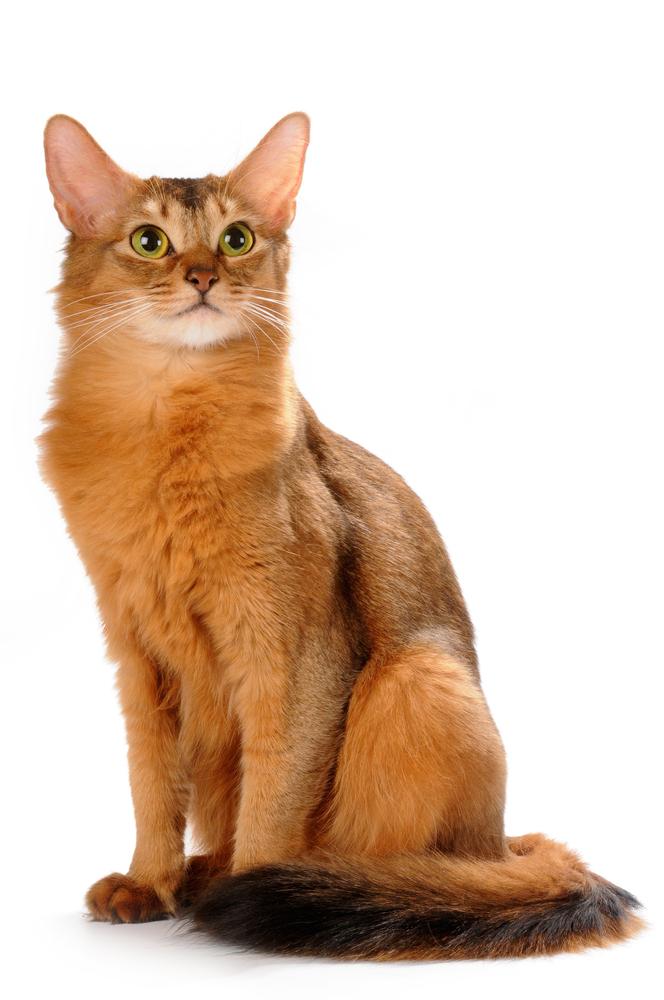 somali chat kondomeriet no