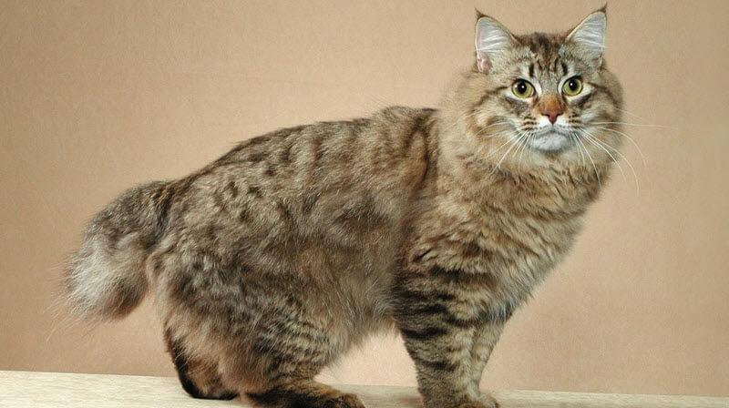 felix the cat plush