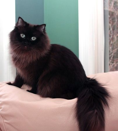 Personality Of Black And White Cats