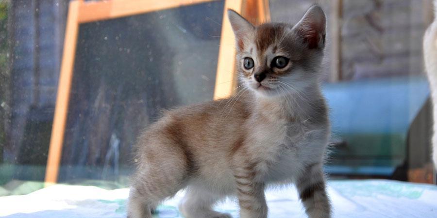 Asian Female Cat Names
