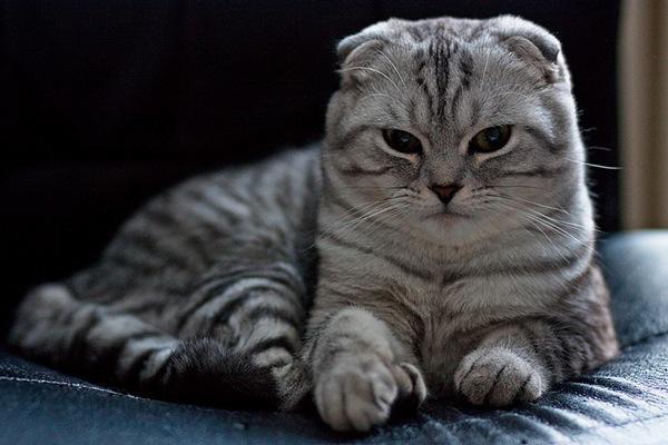 Корм для кошек  GO Natural holistic  Отзывы покупателей