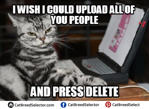 Angry Cat Meme Photos angry cat memes cat breed selector,Angry Meme