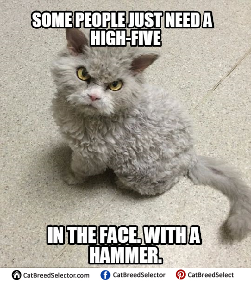 angry cat meme no - photo #26