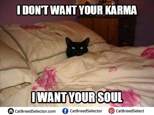 Cat Lazy Meme