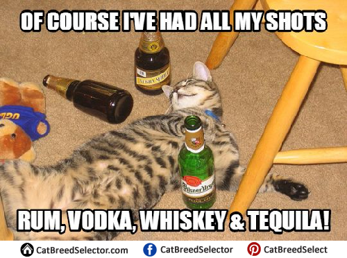 You Can Do It Cat Meme Cat Memes | Cat Breed ...