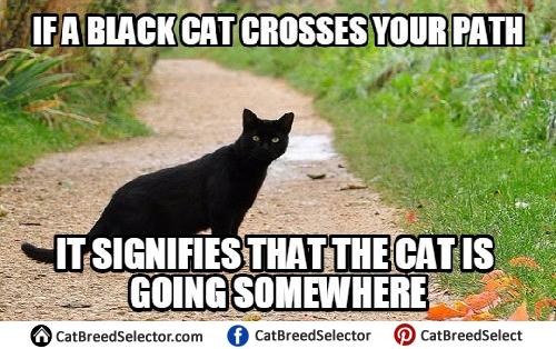 Black Cat Laptop Meme