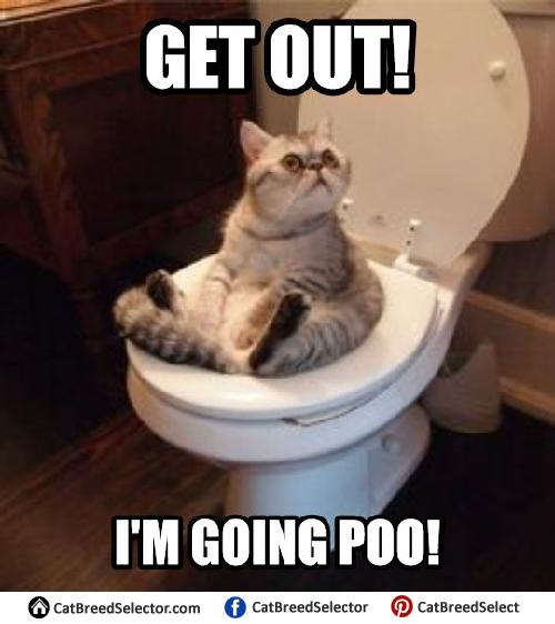 Funny It Meme : Cat memes breed selector