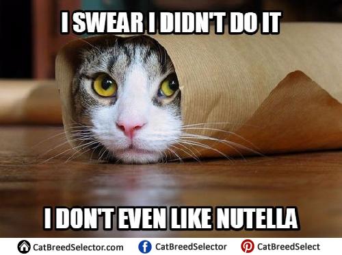 Funny Cat Birthday Meme : Cat memes cat breed selector