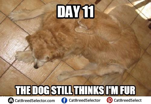 cat memes cat breed selector