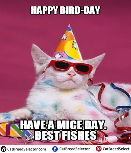 Happy Birthday Cat Memes Funny happy birthday cat memes cat breed selector