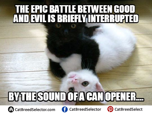 Cats Meme Watch Out Human