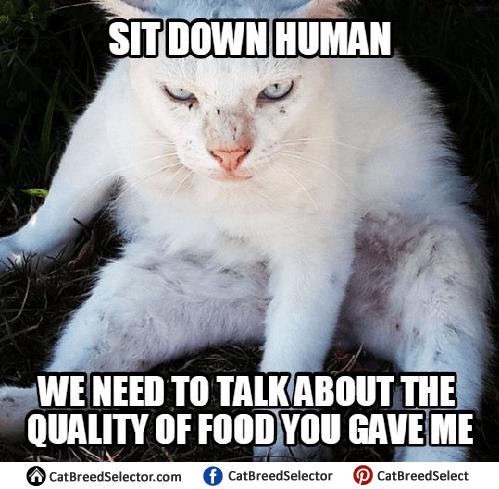 Mischevous Cat Meme