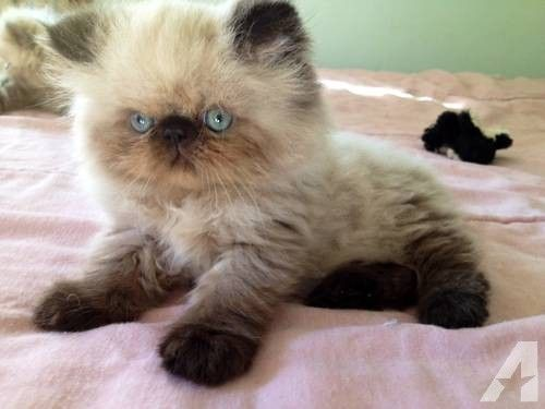 cat predicts death