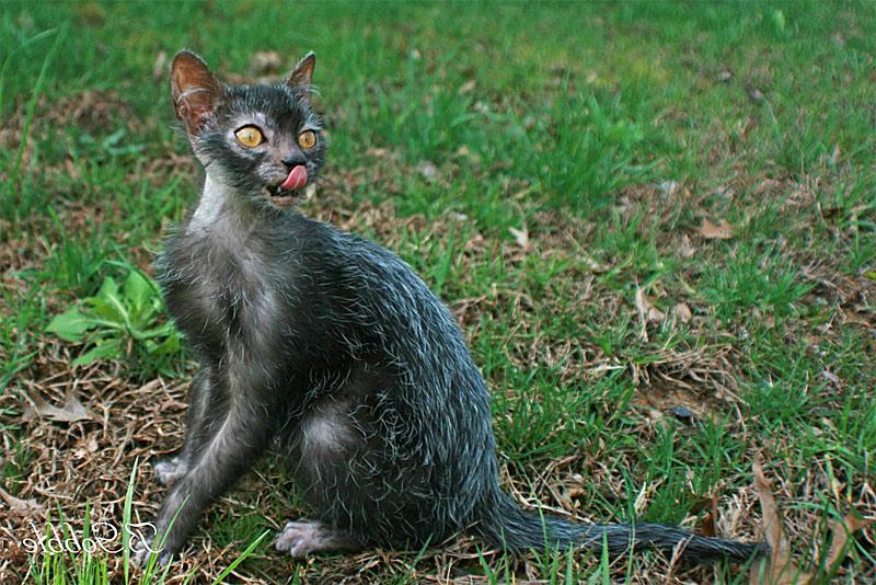Cat   Kg In Weight