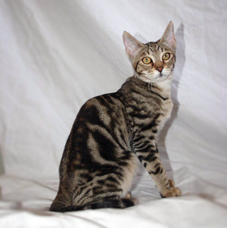 Slim Names For Cats