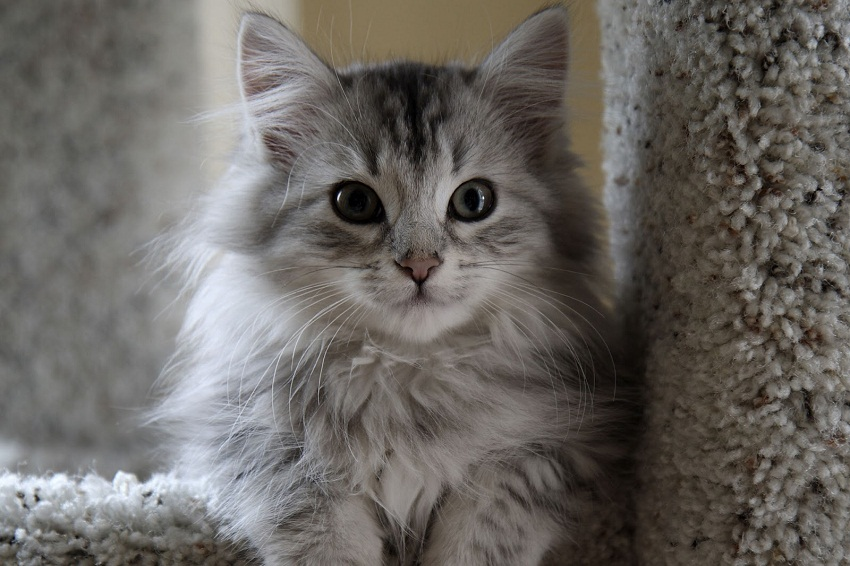 felix the cat gif