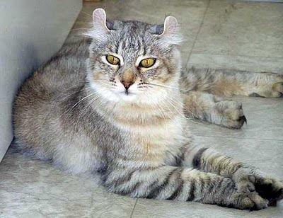Bobbed Tail Cat Names