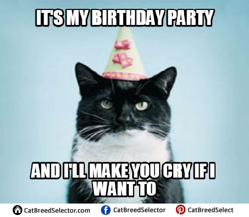 It S My Cat S Birthday Meme