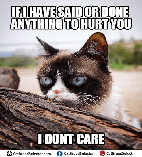 Grumpy Cat Memes   Cat Breed Selector