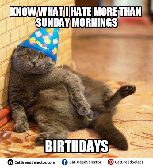 Funny Happy Birthday Image With Cats