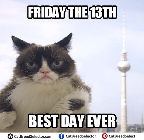 Kitty Cat Birthday Meme