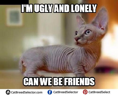 Hairless Cat Memes Cat Breed Selector