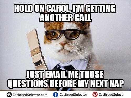 Business Cat Memes Cat Breed Selector