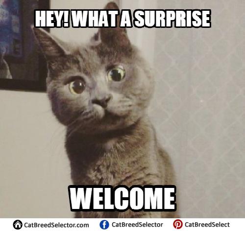 Cat Memes| Cat Breed Selector