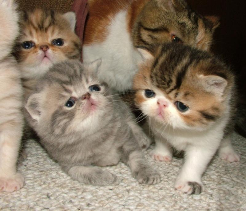 What Is A Good Cat Food For Kittens
