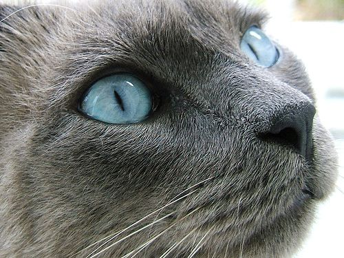 Blue eyes Russian
