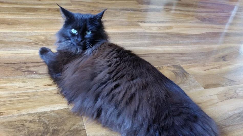 Black White Brown Cat Names